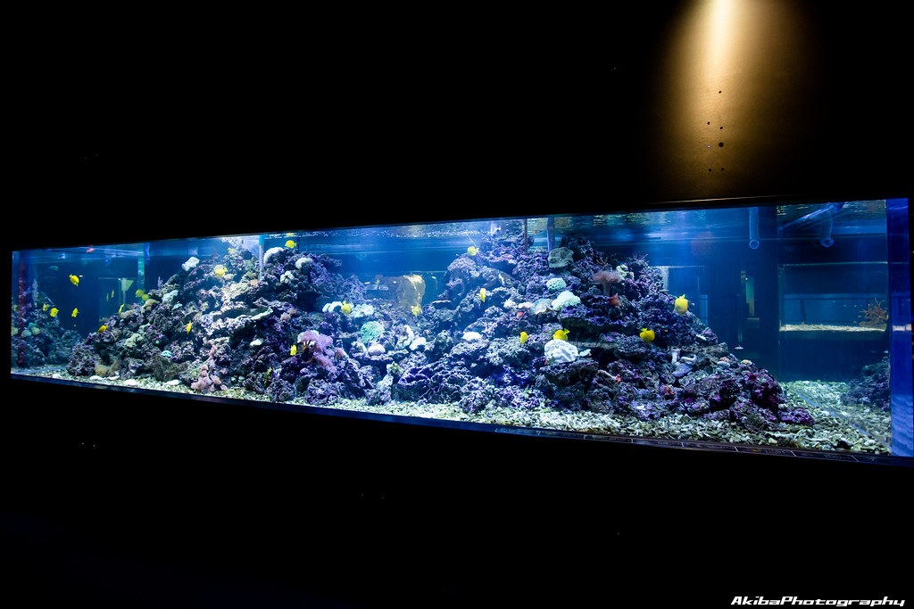 sumida-aquarium#18