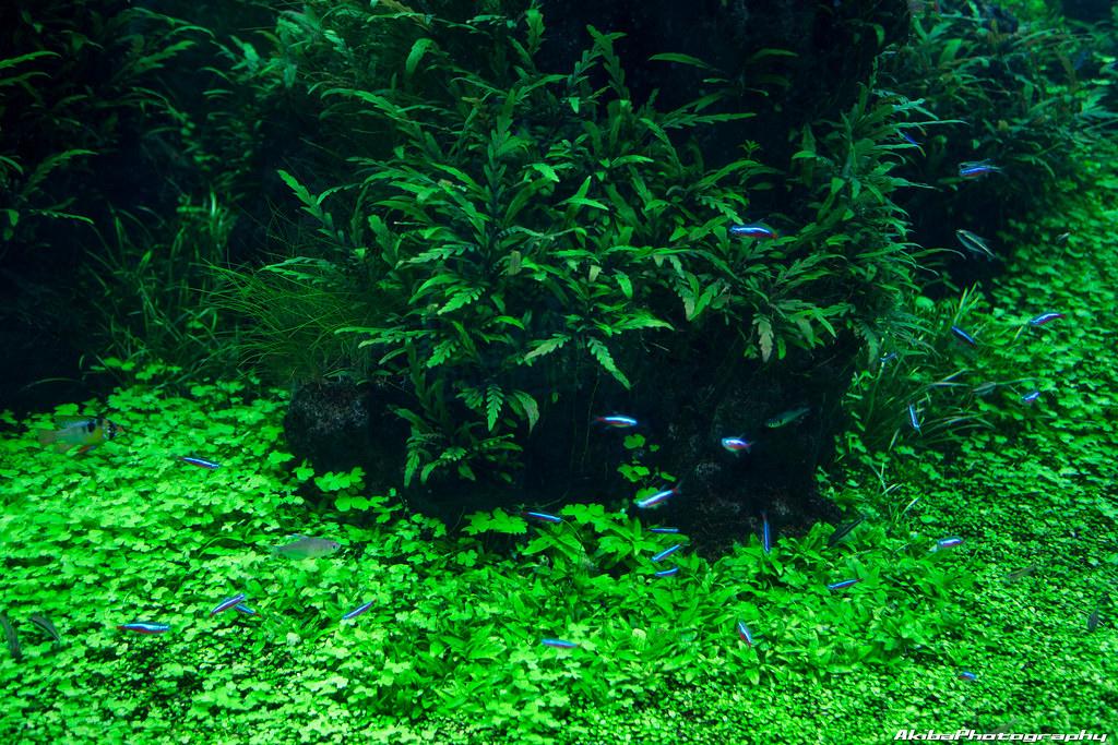 sumida-aquarium#9