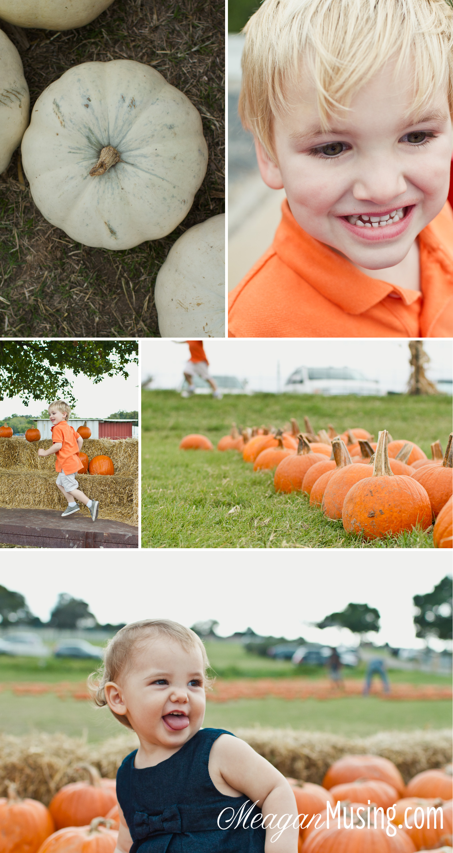 WEB_PumpkinPatch