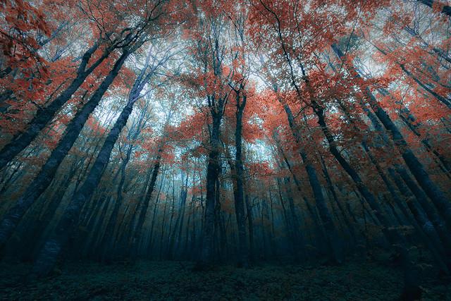 Dark forest   Flickr -...