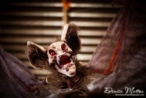 341: Scary bat