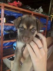 Puppy, Vang Vieng