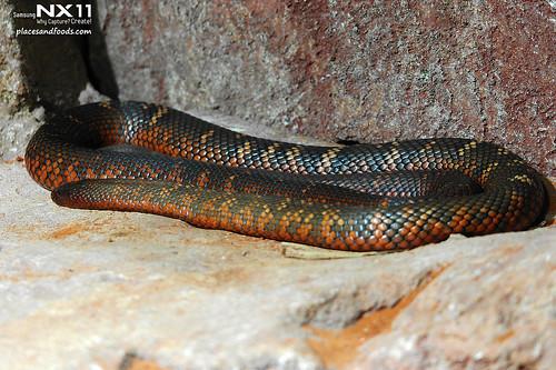 WILD LIFE Sydney Zoo snake