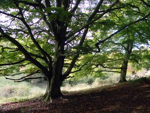 Trees on a ridge