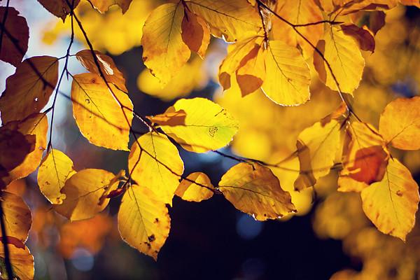 Detaily podzimu