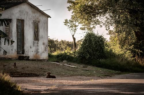 Camino por vereda by Rey Cuba