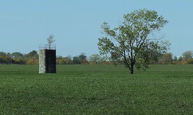 Short silo with tree