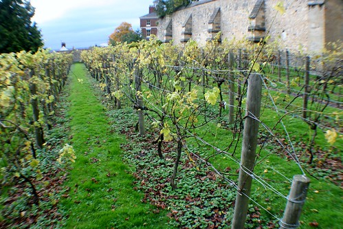 Vineyard at Bishops' Palace