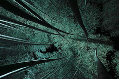 [フリー画像素材] 自然風景, 森林, 竹・竹林, 緑色・グリーン ID:201211030600