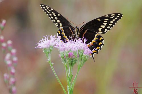 butterfly geotagged jacksonville geo:lat=3012708448 geo:lon=8154601937