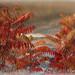 Keshena Falls, Wi. 10-03-12 by Back in The Florida Keys