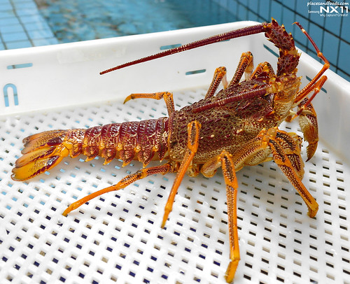 tas live lobster