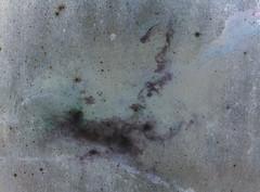 floor(0.0), wall(0.0), soil(0.0), fungus(0.0), flooring(0.0), mold(1.0),