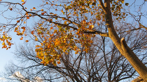 Late autum foliage.  Elmwood Park Illinois.  Late October 2012. by Eddie from Chicago