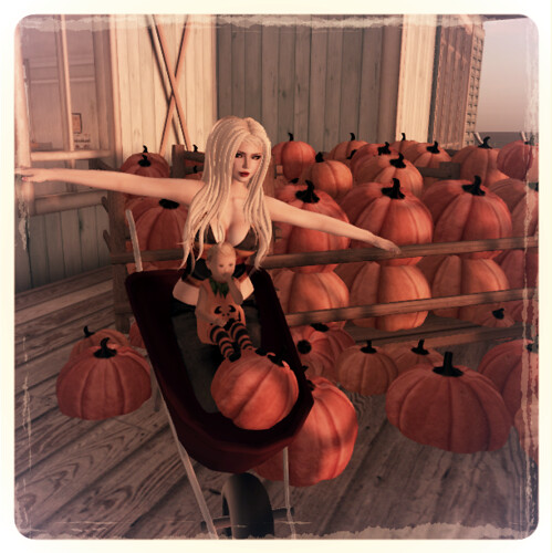 Pumpkin Time 2
