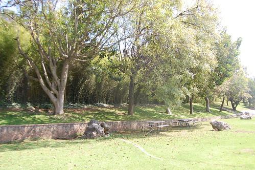 arboles Ixtapan
