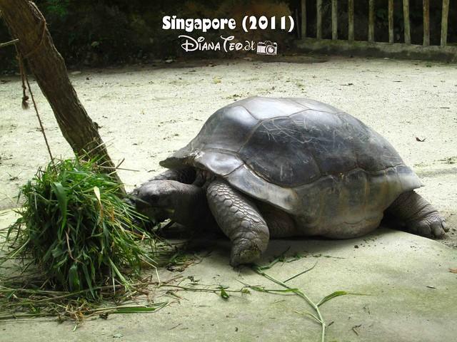 Day 3 Singapore - Zoo Singapore 18