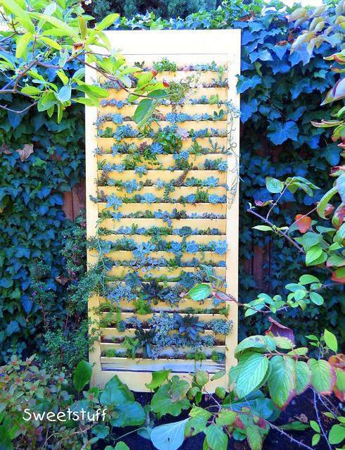Succulent shutter door