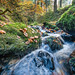Silberbachtal # 16 - Bach, Herbstlaub und bemooste Felsen - Creek, autumn foliage, and mossy rocks