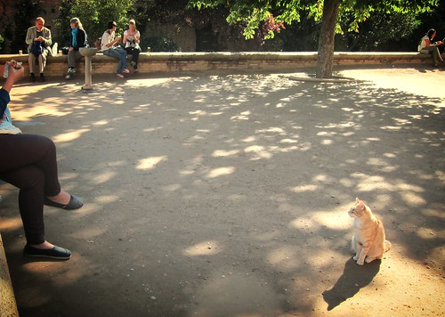 Alhambra cat (cropped, filtered)
