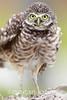 You Ruffle My Feathers by Megan Lorenz