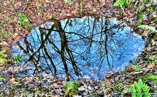 Woods water
