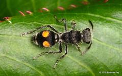 Hymenoptera of Ecuador