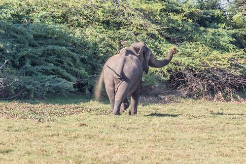 southernprovince srilanka