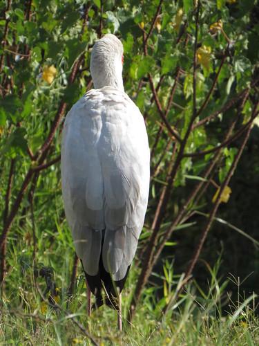 kenya birds lakenaivasha