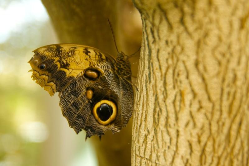 butterfly  2248
