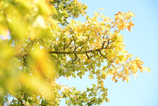 Nikon D600 (www.fotovideo.nu)