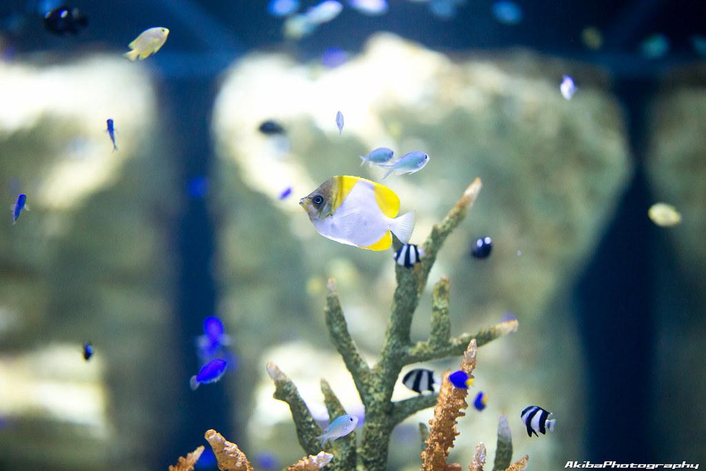 sumida-aquarium#23