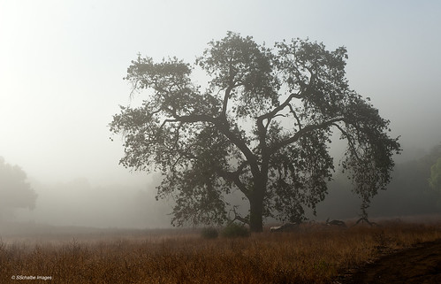california ranch autumn trees mist fall fog landscape oaks coastalliveoaks californiatnc11