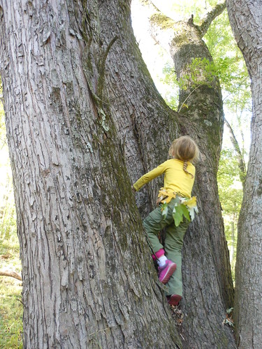 Even More Tree Climbing