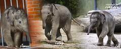 Elefantissimo 2012_01_28