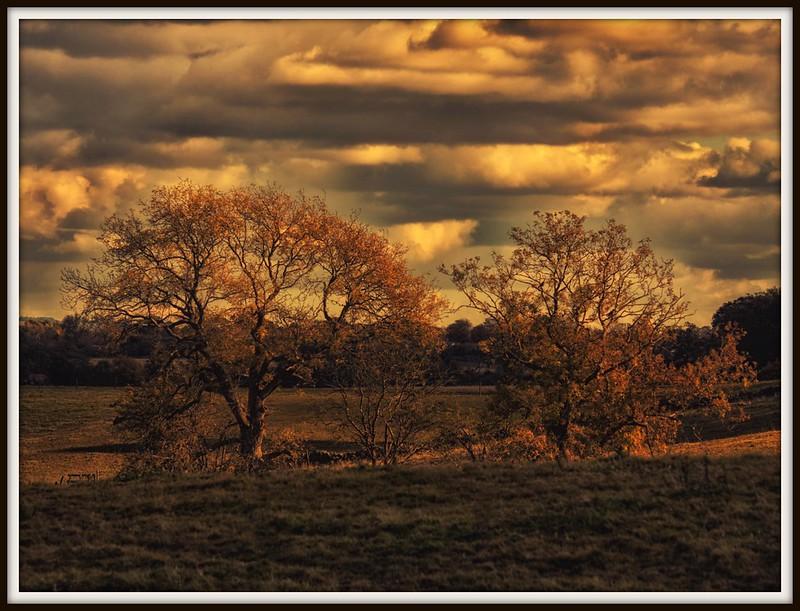 Golden light at Torwood