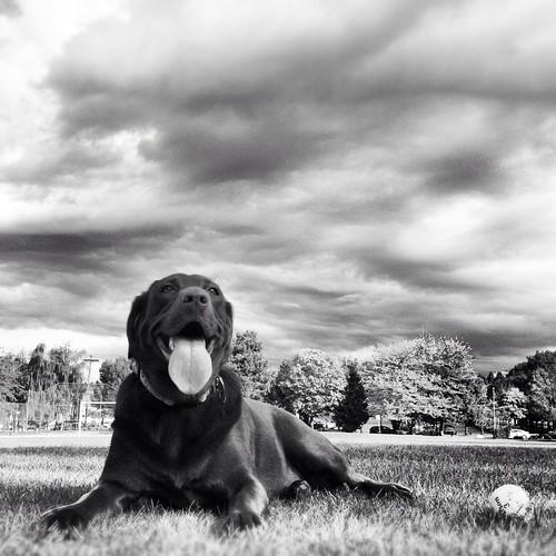Roxie at the park by mariskar