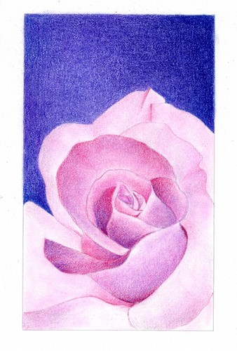 2012_10_19_rose_01 by blue_belta