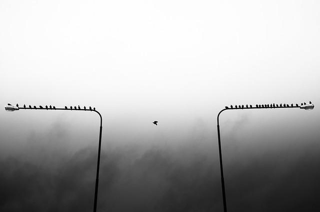 Urban Migratory Bird - Minimalism in Street Photography