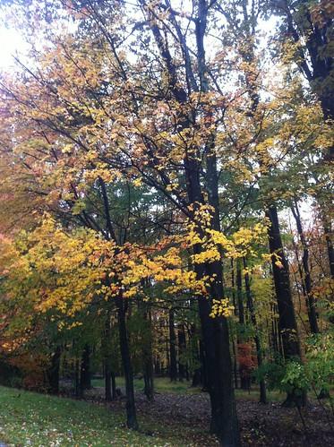 WPIR - welcome fall foliage