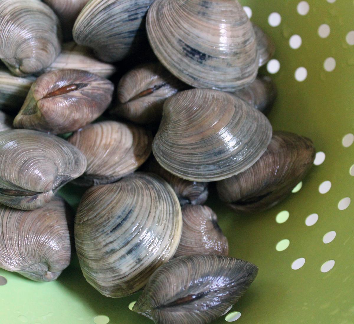 clams4
