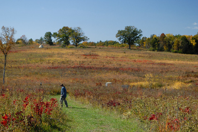 Shaw Nature Reserve (the Arboretum), in Gray Summit, Missouri, USA - prairie with figure