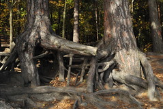 If these Roots could Talk .........