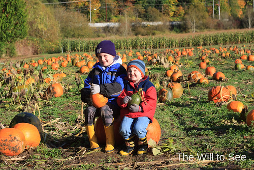 pumpkin patch 2012 #3