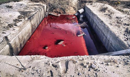 Crimson Pool