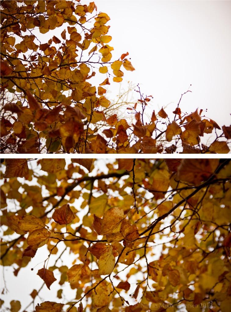 Efterår1