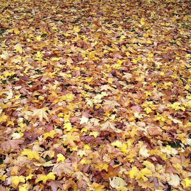 #Love #autumn #leaves #orange #brown #yellow #red