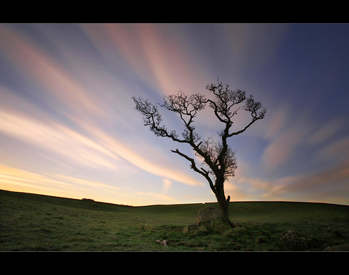 Corra Tree  by Mike Bolam