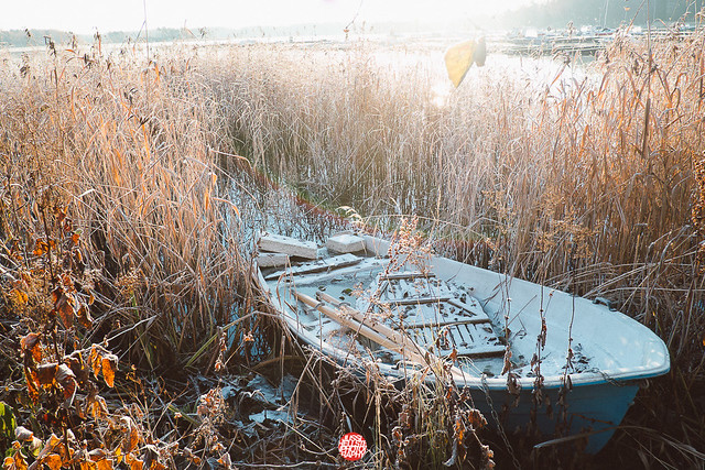 303/365 Boat In Bed Of Reeds