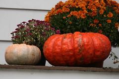 pumpkin 087